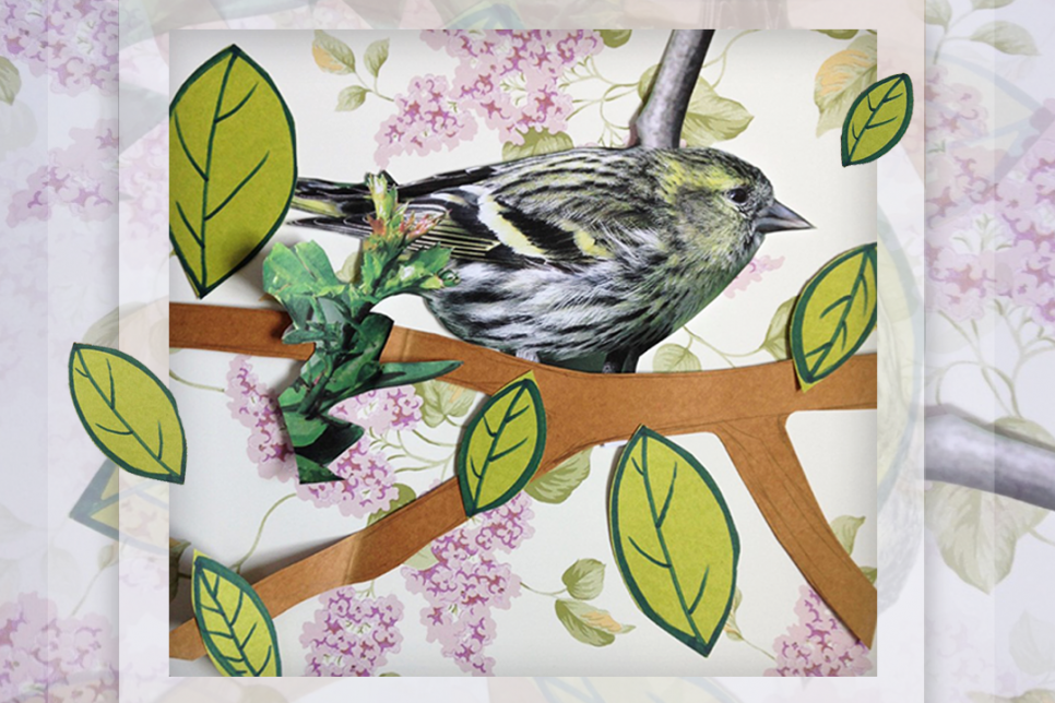 Photo collage of bird, flowers and leaves